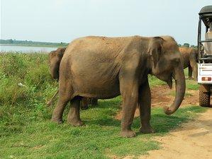 2 Days Picturesque Safari in Udawalawe National Park, Sri Lanka