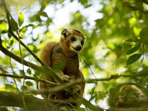 10 Days Guided Safari and Beach Tour in Madagascar