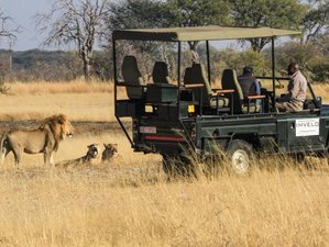 10 Days Game Drive Safari in Zimbabwe