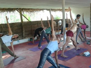28 Days 300-Hour Soul-Stirring Yoga Teacher Training in Kerala, India