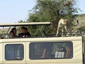 2 Days Wildlife Safari at Mikumi National Park, Tanzania