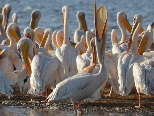 4 Days Astounding Safari in Kenya