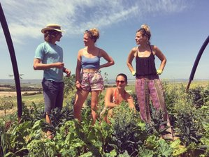 7 Days Introduction to Permaculture and Yoga Holiday in Cadiz, Spain