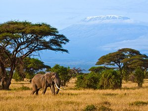 6 Days Amazing Wildlife Safari in Masai Mara and Amboseli,  Kenya