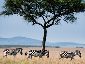 11 Days Luxury Etosha National Park Safari