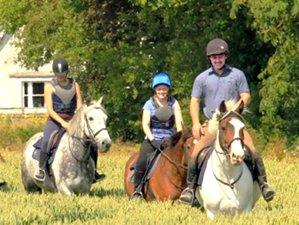 8 Days Jumping, Trekking, and Flatwork Horse Riding Holiday in Tullamore, Ireland