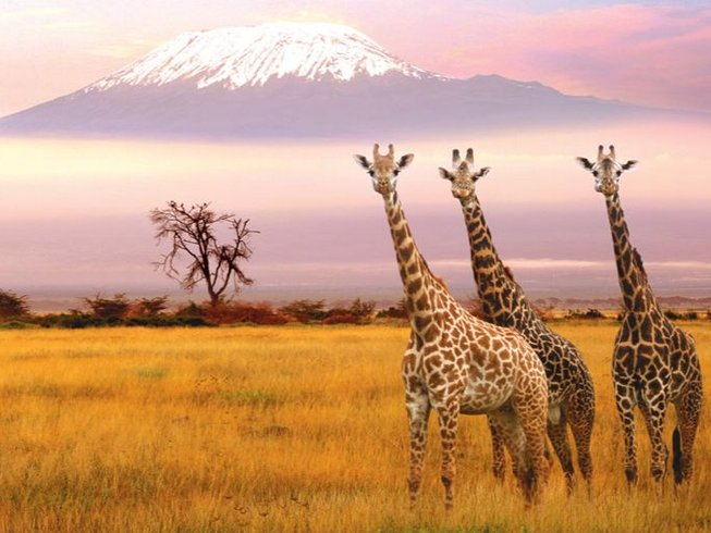 6 Days Machame Route Kilimanjaro Safari and Trekking