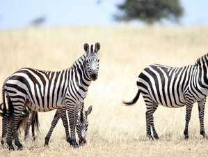 4 Days Maasai Mara and Lake Nakuru Budget Safari in Kenya