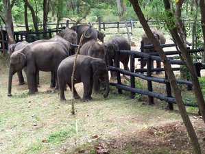 9 Day Budget Safari Tour in Sri Lanka