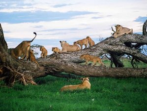 4 Days Wildlife Safari in Tanzania