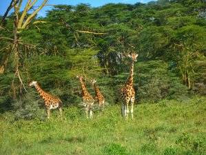5 Days Lake Nakuru, Ol Pejeta, and Samburu Safari in Kenya