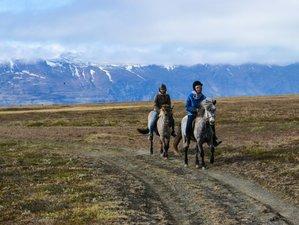 4 Day Horse Riding Holiday to Galtastaðir Farm in Egilsstaðir, Fljótsdalshérað
