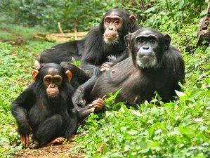 12-Daagse Safari in de Jungles van Oeganda