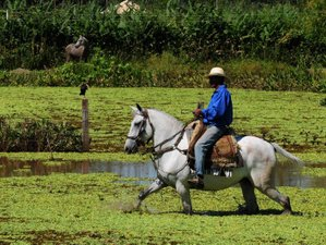 3 Day Wildlife Experience with Horseback Riding in Poconé, Mato Grosso