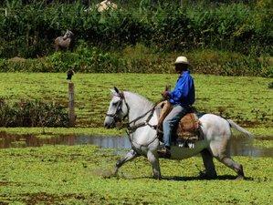 3 Days Wildlife Experience with Horseback Riding in Poconé, Brazil