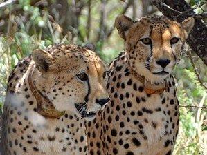 5 Days Adventure Safari in South Africa