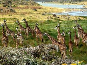 5 Days Big Five Safari Tour in Tanzania