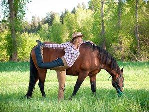 6 Day Yoga, Tai Chi, and Horses Harmony of Body and Mind Retreat in Joliet, Montana