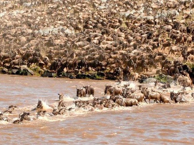 3 Days Maasai Mara Joining Safari in Kenya