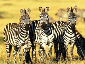 3 Days Majesty of Tsavo Safari in Kenya