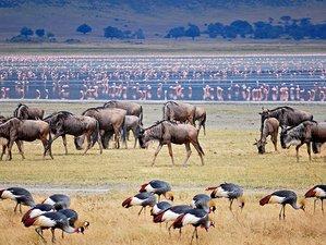 3 Days Best Private Tented Camp Safari in Tanzania
