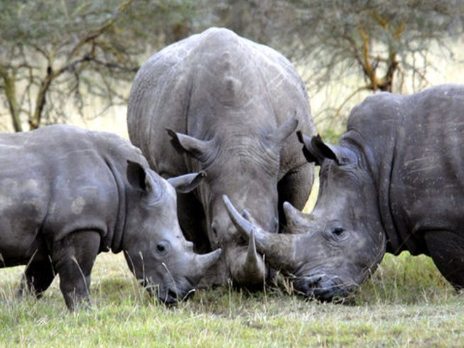 4 Days Kruger National Park Rhinoceros Safari
