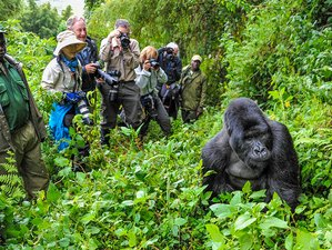 6 Days Gorilla Habituation Safari in Uganda