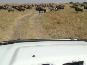 3 Days Wonderful Amboseli National Park Safari in Kenya