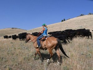 4 Days Women's Healing Retreat and Ranch Vacation in Montana, USA