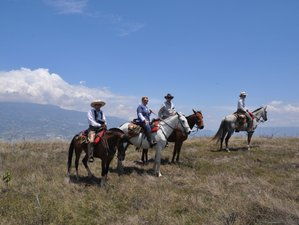 8 Days Mesmerizing Coffee Trail Horse Riding Holiday in Colombia