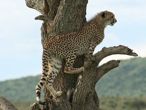 3 Days Best Masai Mara Safari with Annual Migration Special in Kenya