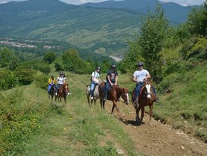 7 Days Horseback Riding Holiday for Intermediate and Advanced Riders in Prahova, Romania