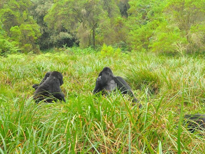 4 Days Gorilla Trekking Safari in Uganda