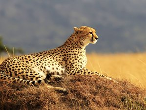 11 Days Amazing Wildlife Safari in Kenya