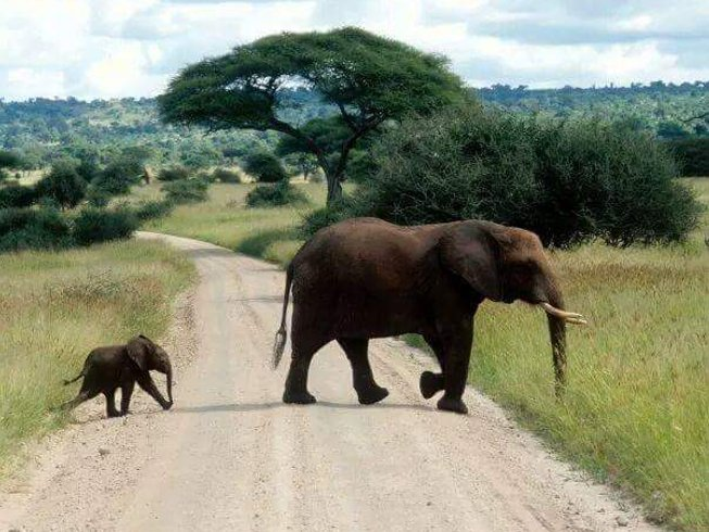 7 Days Wildlife Migration Safari in Kenya and Tanzania