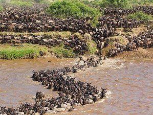 8 Days Wildebeests Great Migration Adventure Safari in Tanzania