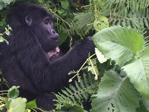 8 Day Primates Encounter and Game Safari Adventure from Entebbe to Kigali