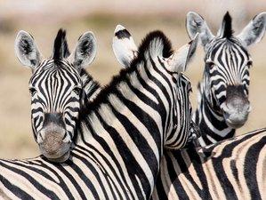 12-Daagse Self-Drive Safari Tour in Namibië