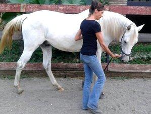 4 Day Empowering Yoga and Natural Horsemanship Retreat in Central Java, Salatiga