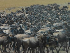 6 Days Serengeti National Park Wildebeest Migration and Ngorongoro Crater Safari in Tanzania