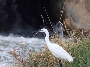 2 Day Birdwatching Experience in Ebro Delta Natural Park, Tarragona