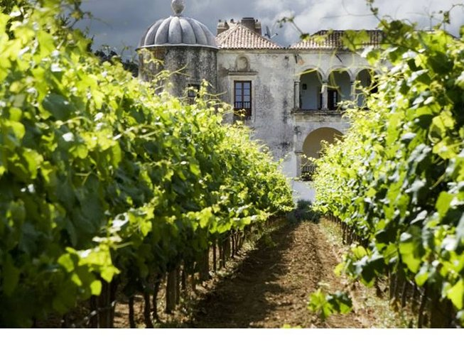 7 Days Portugal Wine Tour