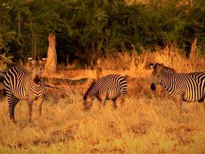 4-Daagse Safari in South Luangwa National Park, Zambia