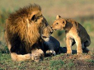 """12 Days """"Best of Uganda Wildlife"""" Safari in Uganda"""