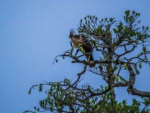 4 Day Amazon Wildlife Experience in Quito