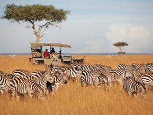 6 Days Kenya Safari in Maasai Mara, Lake Nakuru & Amboseli National Park