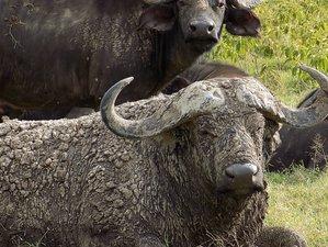 10 Days Maasai Mara, Lake Nakuru, Amboseli, Arusha, Serengeti, Ngorongoro Crater Budget Safari