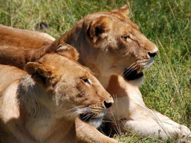 5 Days Amboseli, Lake Nakuru, and Maasai Mara Safari in Kenya