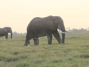 4 Days Kenya Highlights Family Luxury Safari