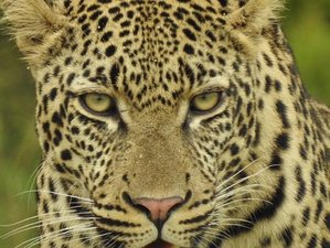 5 Days Kruger National Park and Panorama Combo Safari in South Africa